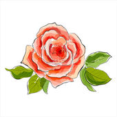 Beautiful red rose. Stylized watercolor illustration — Stock Vector