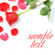 Stock Photo: Red rose and petals on white background