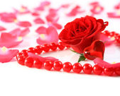 Ed rose and petals with heart ans beads isolated — Stock Photo