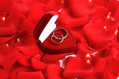 Wedding rings and roses petals — Stock Photo