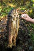 Smoked trouts — Stock Photo