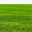Stock Photo: Green grass on field