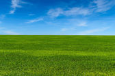 Green grass on the field — Stock Photo