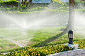 Automatic Sprinkle plants in the garden — Stock Photo