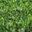 Stock Photo: Plant wall