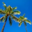 Green palm trees on blue sky background — Stock Photo #46243439