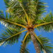 Green palm trees on blue sky background — Stock Photo #46243519