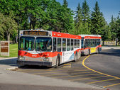 Calgary transit buses — Stock Photo