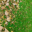 Leaves on green grass — Stock Photo
