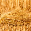 Sheaves of ripe wheat — Stock Photo