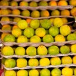 Lots ripe citrus isolated on market — Stockfoto