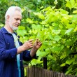 Portrait of senior man gardening — Stock Photo
