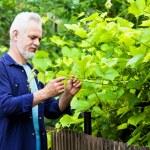 Portrait of senior man gardening — Stock Photo