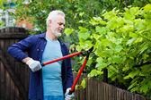 Ritratto del giardiniere anziano uomo pota una siepe — Foto Stock