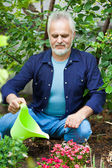 Portrait of senior man watering flowers — Stock Photo