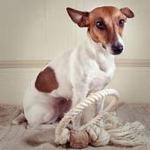 Doggy — Stock Photo