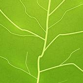 Vector fresh green leaf texture — Stock Vector
