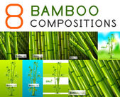 Set of vector nature bamboo designs — Stock Vector