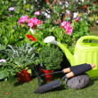 Planting flowers with garden tools ,various flowers and herbs in — Stock Photo #24069639