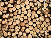 Firewood — Стоковое фото