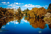 Fascinating landscape, trees reflected in the river — Stock Photo