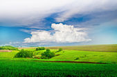 Green field and blue cloudy sky — Foto de Stock