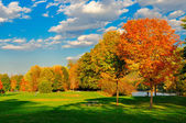 Fall foliage and a field. — Stock Photo