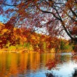 Stock Photo: Glorious fall colors