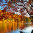 Glorious fall colors — Stock Photo #18163925