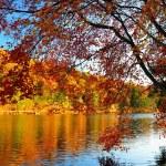 couleurs d'automne glorieux — Photo