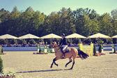 Horse dance — Stock Photo