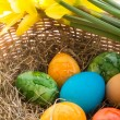 Stock Photo: Coloured eggs