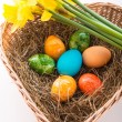Coloured eggs — Stockfoto