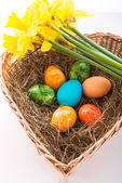Coloured eggs — Stock Photo