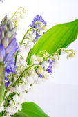 Lily of the Valley and Scilla — Stock Photo
