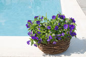 Swimming pool and flower — Stock Photo