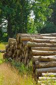 Saw round timber — Stock Photo