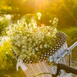 Baskets with daisies at sunset — Stock Photo #28587517