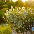 Baskets with daisies at sunset — Stock Photo