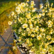 Baskets with daisies at sunset — Stock Photo #28753183