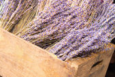 Dry lavender blossoms — Stock Photo