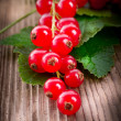 Red currants — Stock Photo
