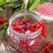 Sugared red currant — Stock fotografie
