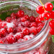 Sugared red currant — Stockfoto