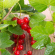 Stock Photo: Red currants