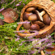 Stock Photo: Basket with mushrooms