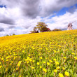 Field of dandelions on a hill with a house and a mill — Stock Photo