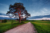 Pine in the setting sun on the road in a field — Stock Photo