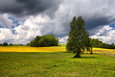 Field of dandelions on a summer day with clouds — Stock Photo