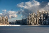 Lake in the ice and forest in winter — Stock Photo